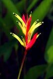 Oiseau de parsdise Image stock
