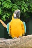 Oiseau de perroquet Image stock