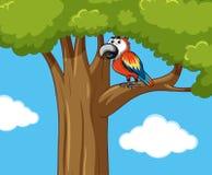 Oiseau de perroquet sur la branche d'arbre illustration libre de droits