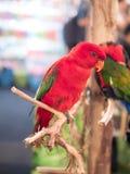 Oiseau de perroquet, perroquet sur le rondin Image stock
