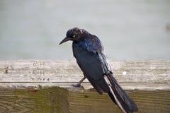 Oiseau 2 de plage Photographie stock libre de droits