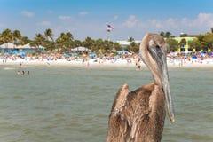 Oiseau de plage Image libre de droits