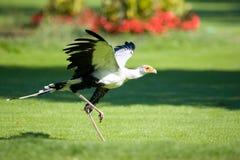Oiseau de proie Image libre de droits
