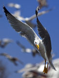 Oiseau de proie photographie stock