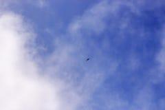 Oiseau de proie dans le ciel bleu Photo stock