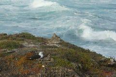Oiseau de repos, île de kangourou, Australie du sud photo stock
