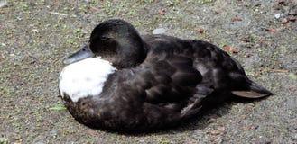 Oiseau de repos Photo stock