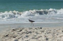 Oiseau de rivage Photographie stock
