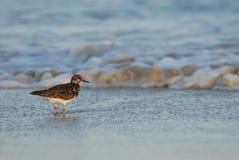 Oiseau de rivage Photographie stock libre de droits