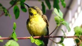 Oiseau de ronflement Photo stock