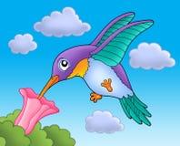 Oiseau de ronflement avec la fleur rose Photographie stock