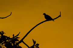 Oiseau de silhouette Photographie stock libre de droits