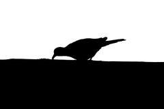 Oiseau de silhouette Photos libres de droits