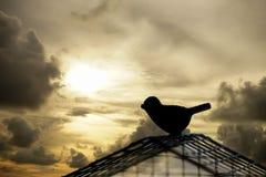 Oiseau de silhouette s'échappant de la cage Concept de liberté Image stock