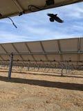Oiseau de solaire Photos stock