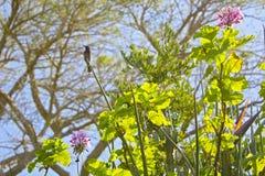 Oiseau de Sun à la lumière du soleil de soirée Images libres de droits