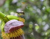 Oiseau de Sun Photo libre de droits