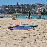 Oiseau de Surfin Photographie stock libre de droits