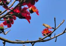 Oiseau de tisserand de Baya Images libres de droits