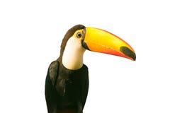 Oiseau de toucan d'isolement sur le blanc Image libre de droits