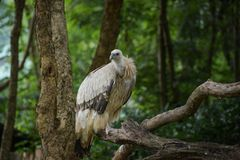Oiseau de vautour Photos libres de droits