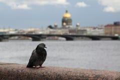 Oiseau de ville Photographie stock