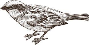Oiseau de ville Image libre de droits
