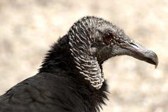 Oiseau de vol en portrait Image libre de droits