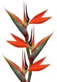 Oiseau des fleurs de paradis Images libres de droits