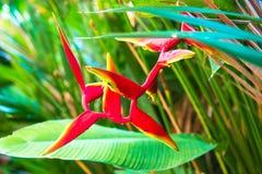 Oiseau des fleurs de paradis Image stock