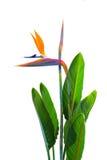 Oiseau des fleurs et des feuilles de paradis images stock
