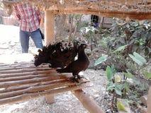 Oiseau deux Image stock