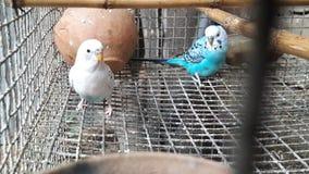 Oiseau deux coloré peu Photographie stock libre de droits