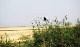 Oiseau donnant sur les marais de sel Image stock