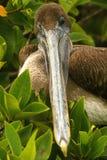 Oiseau drôle Photo libre de droits