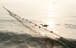 Oiseau drôle Images libres de droits
