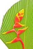 Oiseau du paradis Photographie stock libre de droits