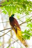 Oiseau du paradis sur un arbre images libres de droits