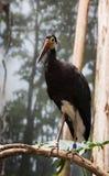 Oiseau en captivité Image stock