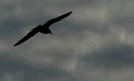 Oiseau en ciel Photographie stock