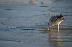 Oiseau en mer Photo stock
