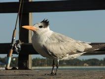 Oiseau en mer avec le fishingman images stock