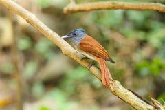 Oiseau en nature Images stock
