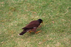 Oiseau en parc photographie stock libre de droits