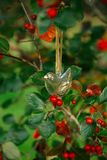Oiseau en verre accrochant sur un arbre avec les baies rouges Image libre de droits