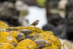 Oiseau encadré par des roches photo stock