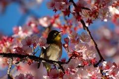 Oiseau entre les fleurs Photographie stock libre de droits
