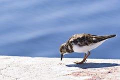 Oiseau environ à manger Images libres de droits
