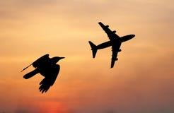 Oiseau et avion pilotant la composition noire de silhouette Images libres de droits