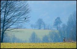Oiseau et cerfs communs Photos stock